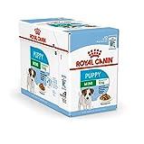 Royal Canin Nassfutter für Mini-Welpen/Junior, 24 Stück, 85 g, für...