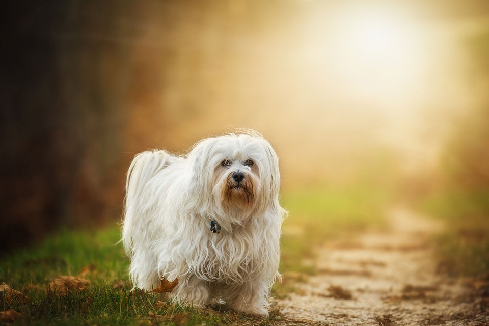 Hundefutter Allergie