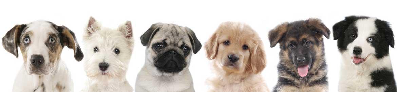 Hundefutter Startseite