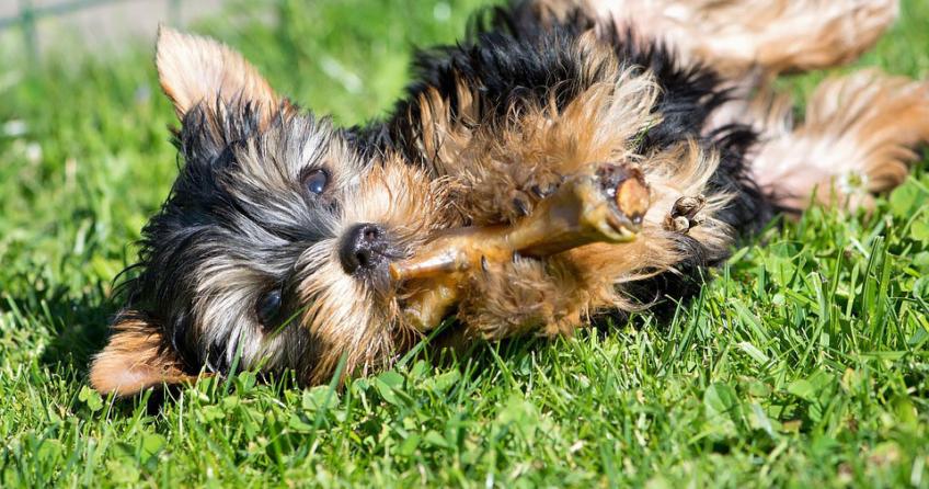 Nahrungsergänzung für Hunde
