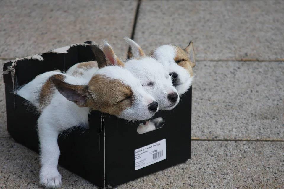 Welpenfutter und schlafende Hunde Welpen