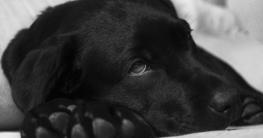 Fieber beim kranken Hund