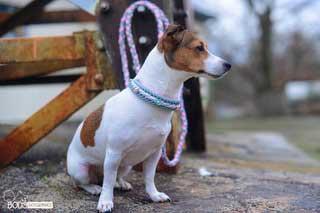 individuelles Hundehalsband