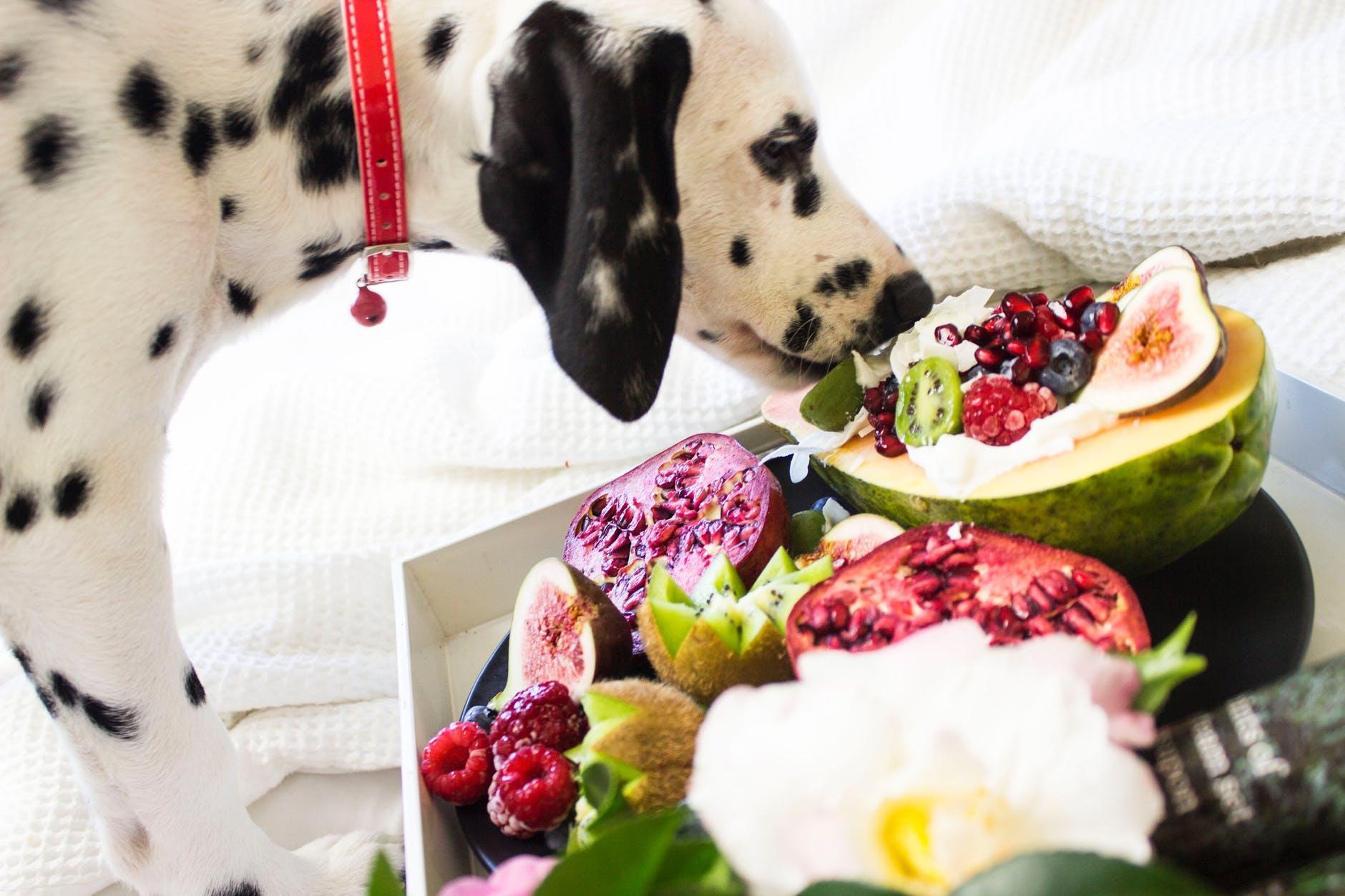 gesundes Hundefutter